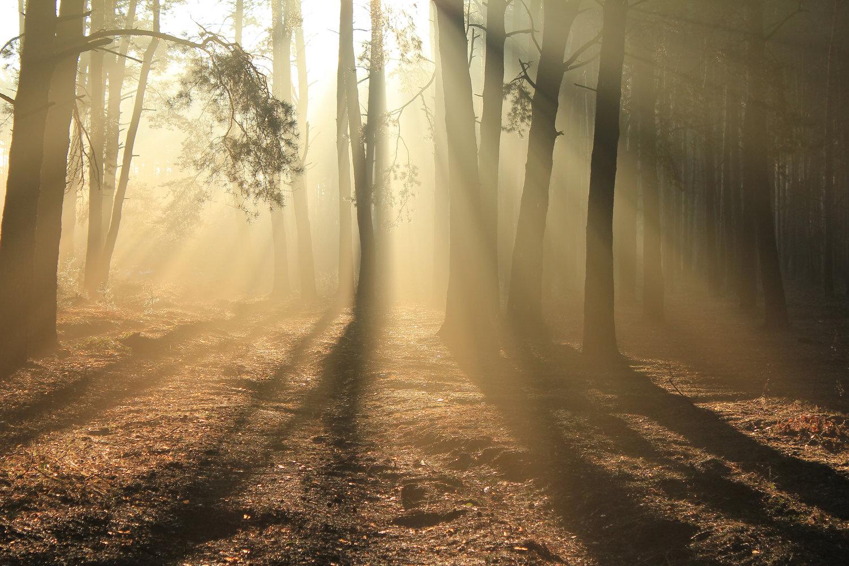 The Spirit World — Living Streams Church